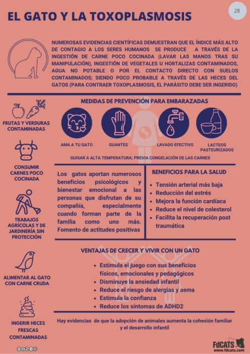 Ficha para gatos y toxoplasmosis