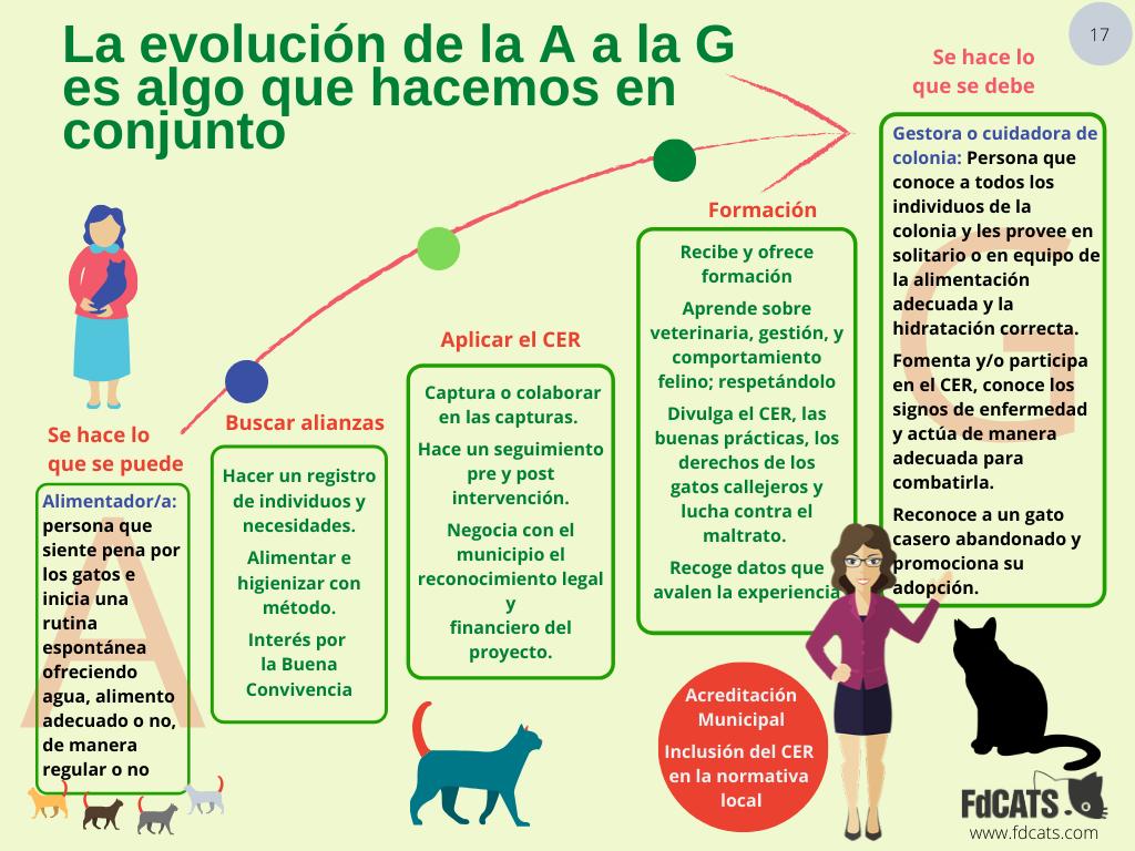 Evolución de la A a la G