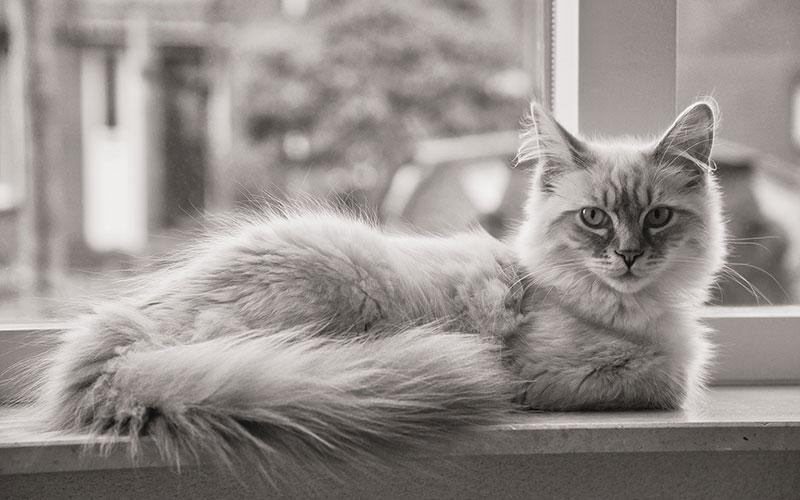 Iamgen gato FdCATS colaboraciones