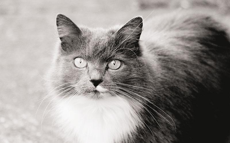 Imágen gato FdCATS Herramientas
