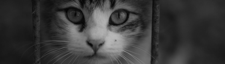 Imagen gato rejs FdCATS