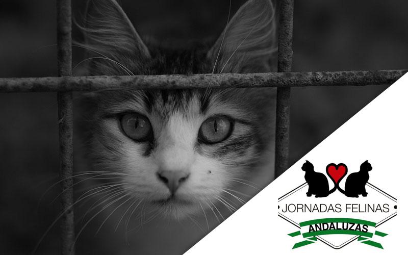 Imagen gato con logo Jornadas Felinas Andaluzas