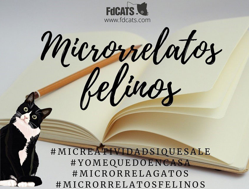 microrrelatos felinos 2020