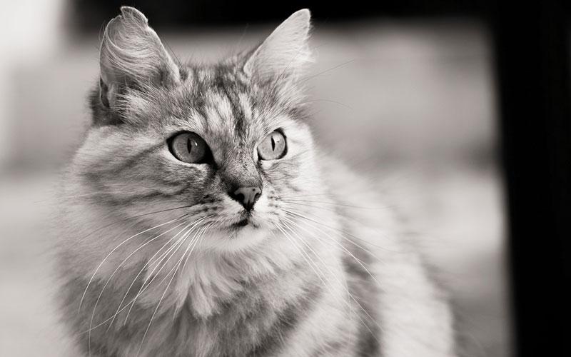 Imagen gato FdCATS